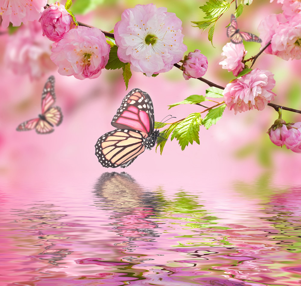 Pink Flower Blossom Butterfly Wallpaper Wall Mural