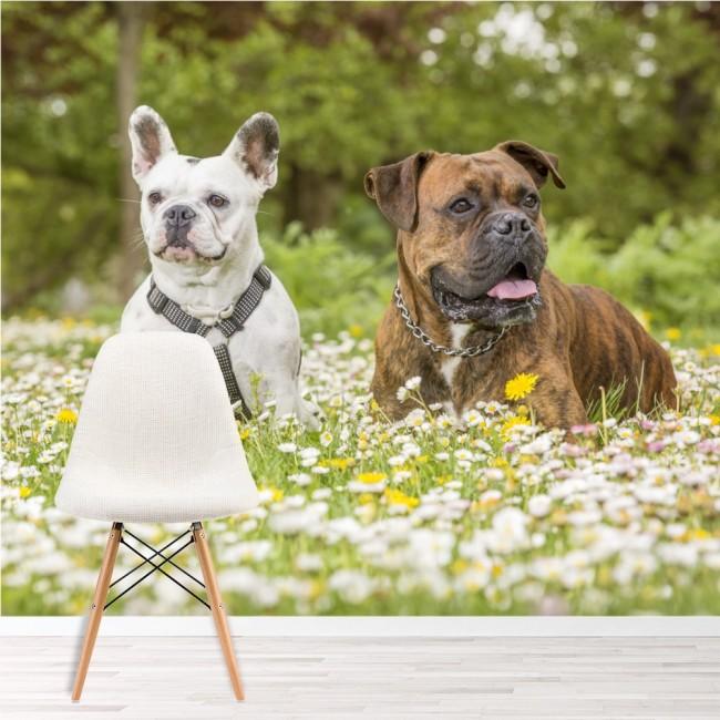 Boxer & Bulldog Dogs Wall Mural Animal Wallpaper Living Room Bedroom ...