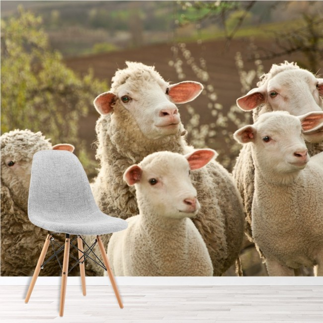 Sheep lambs wall mural funny farm animals wallpaper - Funny pictures farm animals ...