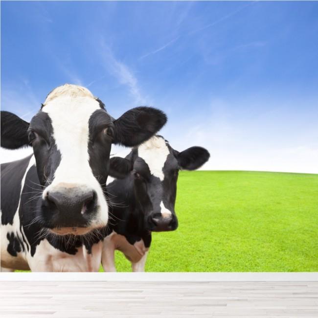 Dairy Cows Wall Mural Farm Animals Wallpaper Kitchen Kids Room Photo Home  Decor