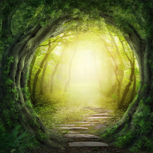 Magic Forest Wall Mural Fantasy Nature Wallpaper Kids Bedroom Photo