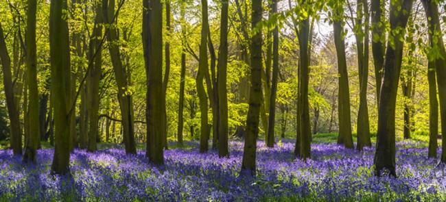 Lavender Forest Wallpaper Wall Mural