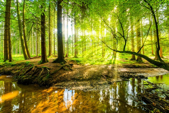 Green Forest Stream Wallpaper Wall Mural