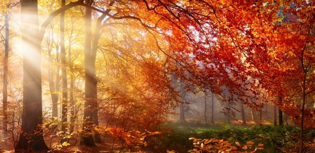 Sunlight In Autumn Forest Wallpaper Wall Mural