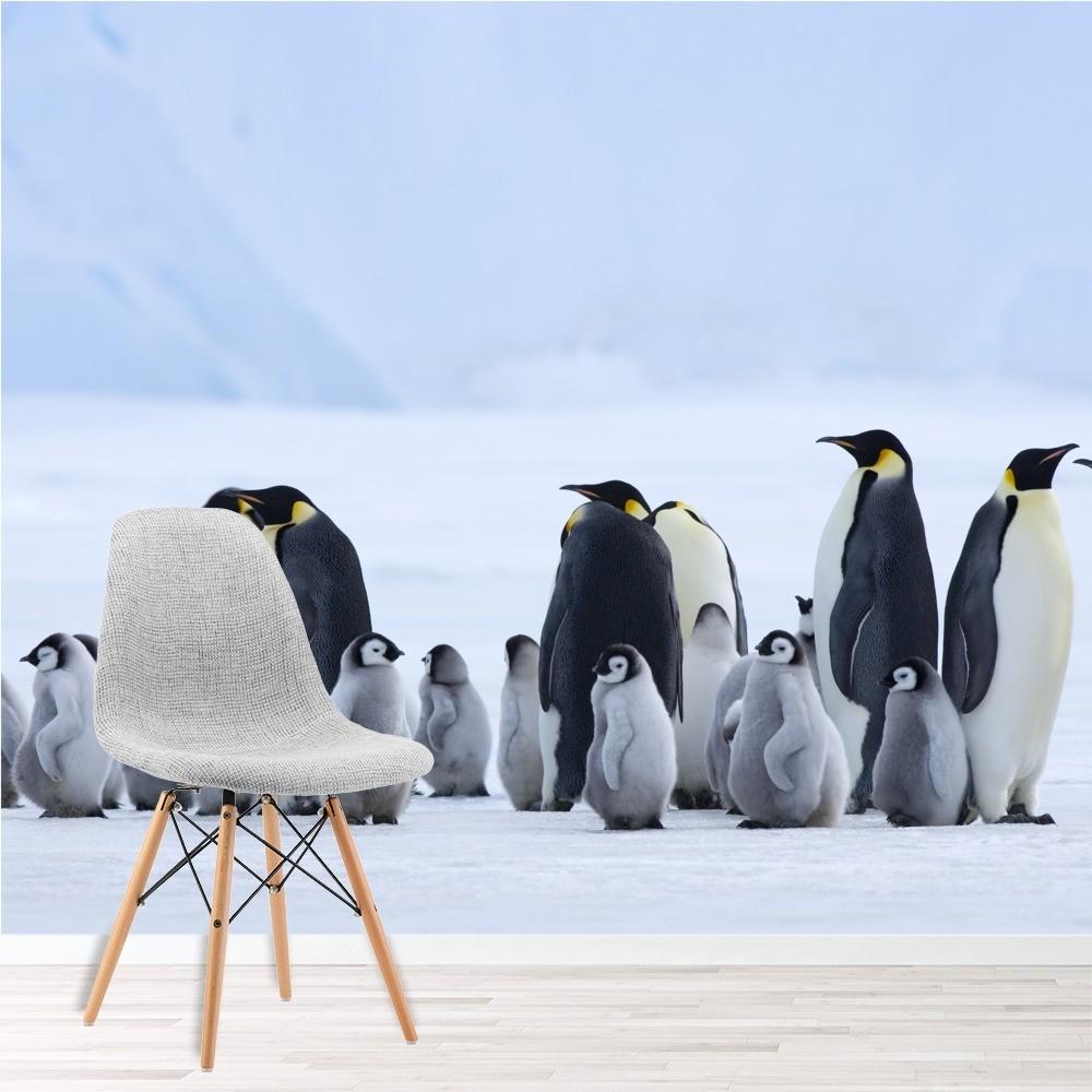 Penguin Family Wallpaper Wall Mural