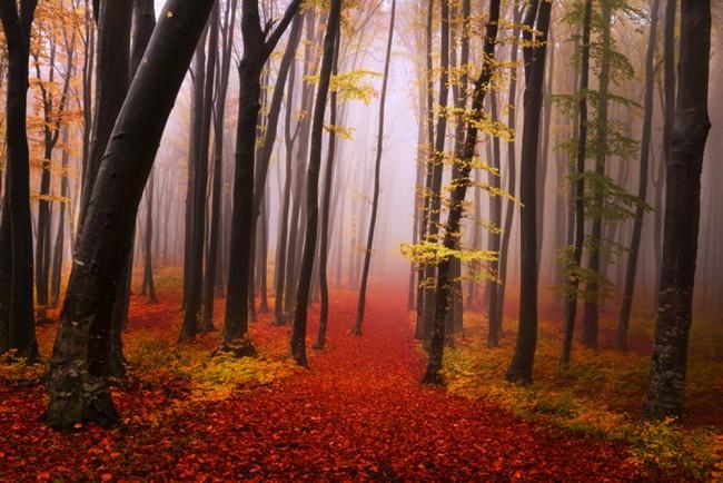 Misty Red Forest Fototapete Bäume Holz Tapete Wohnzimmer Schlafzimmer  Foto-Dekor