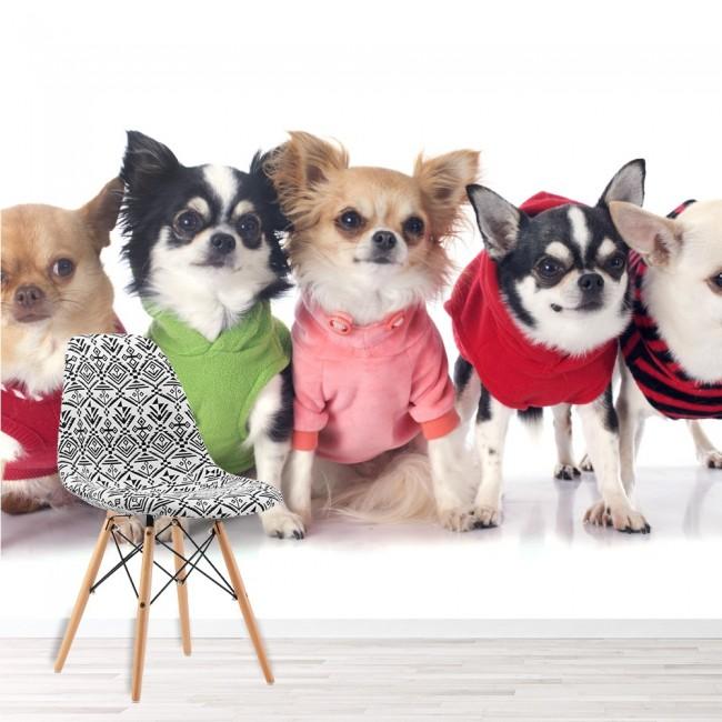 Chihuahua welpen hunde wandbild s e tiere tapete for Dekor weltraum