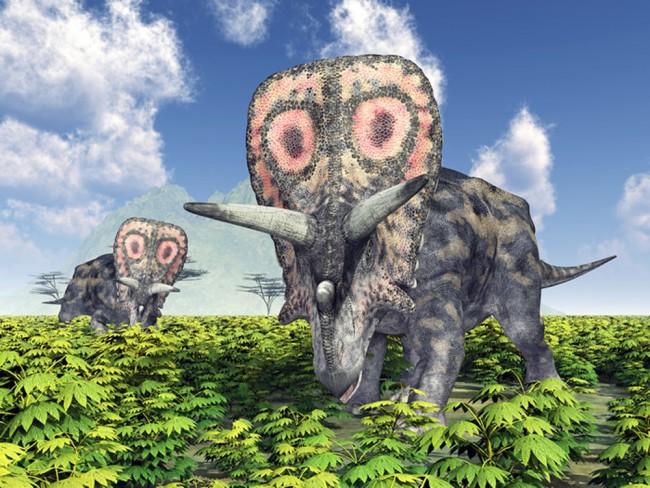 Triceratops Fototapete Jura Dinosaurier Tapete Kinderzimmer Foto