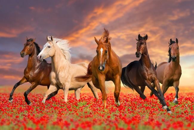Tapete Vlies Fototapete Natur Tiere Pferd Tierportrait Pferdeportrait