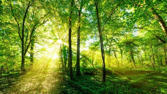 Grüne Bäume Fototapete Wald Natur Tapete Wohnzimmer Schlafzimmer ...