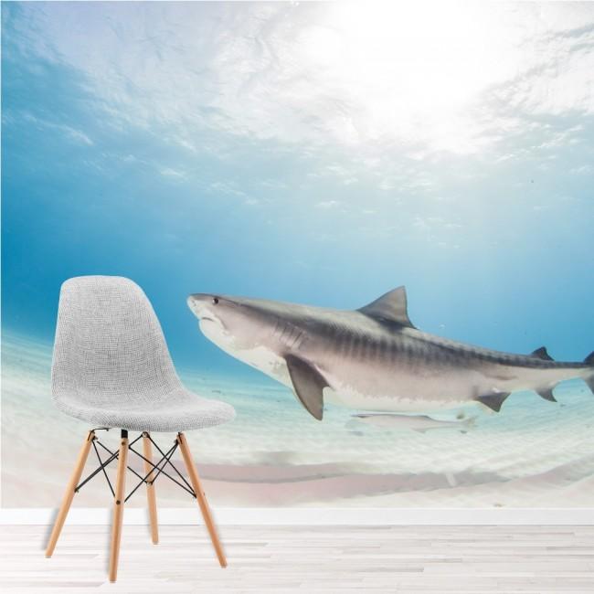 Requin Tigre Papier Peint Photo Sous La Mer Papier Peint Chambre Des Enfants Photo Decor A La Maison