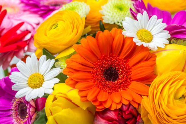 Fleur dété Papier Peint Photo Orange rose jaune Papier peint Chambre ...