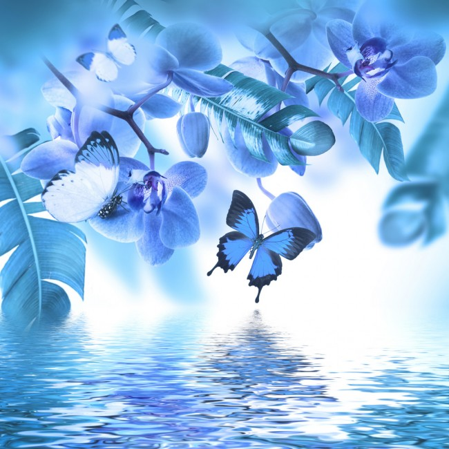 Blue Orchid Flower Butterfly Wallpaper Wall Mural