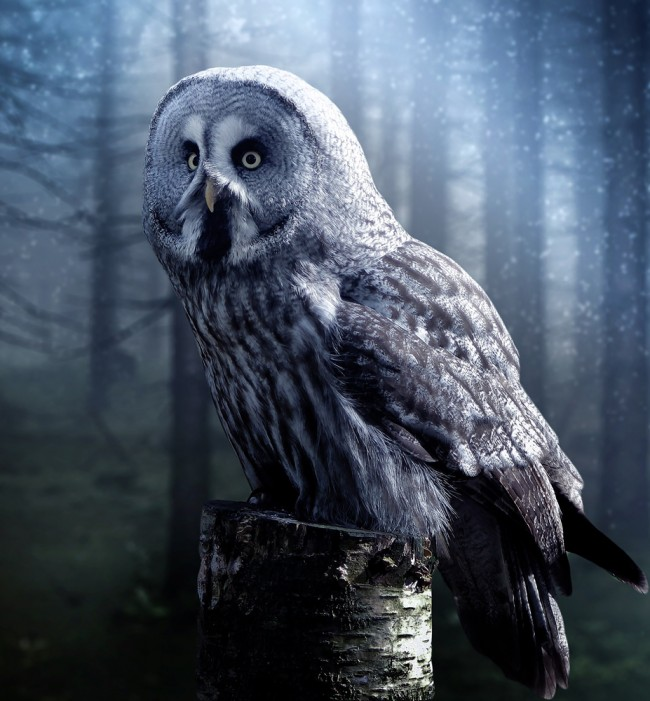 The Grey Owl Wallpaper Wall Mural