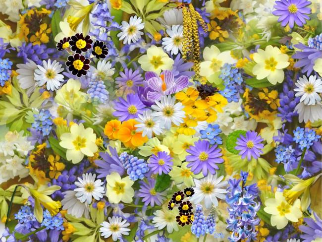In Bloom Purple Yellow Flowers Wallpaper Wall Mural