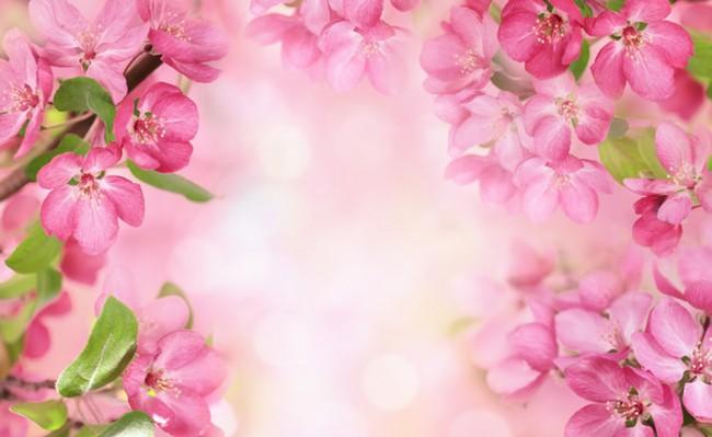 Carta Da Parati Fiori Di Ciliegio : Fiori rosa fotomurali fiore di ciliegio carta da parati camera da