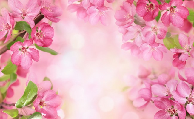 Carta Da Parati Fiori Rosa : Fiori rosa fotomurali fiore di ciliegio carta da parati camera da