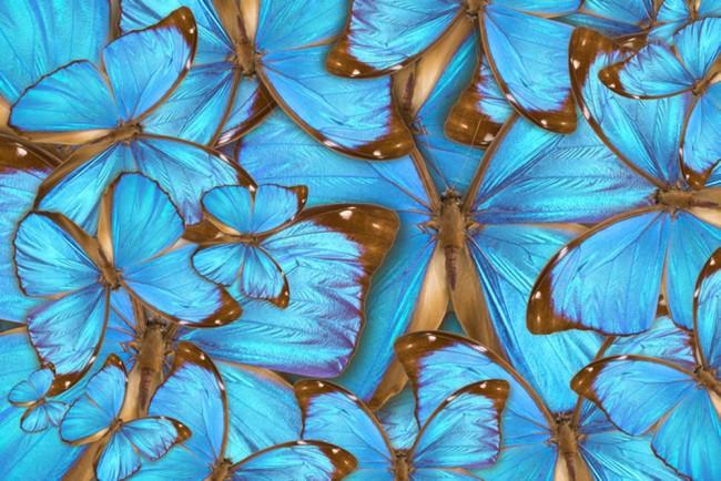 Blue Butterfly Wallpaper Wall Mural