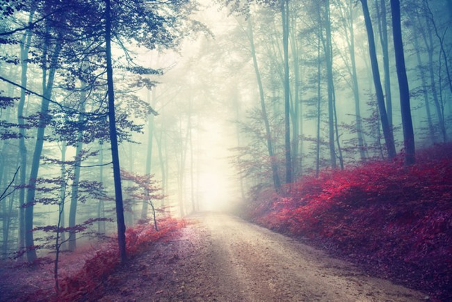 Magical Red Road Wall Mural Misty Forest Tree Wallpaper