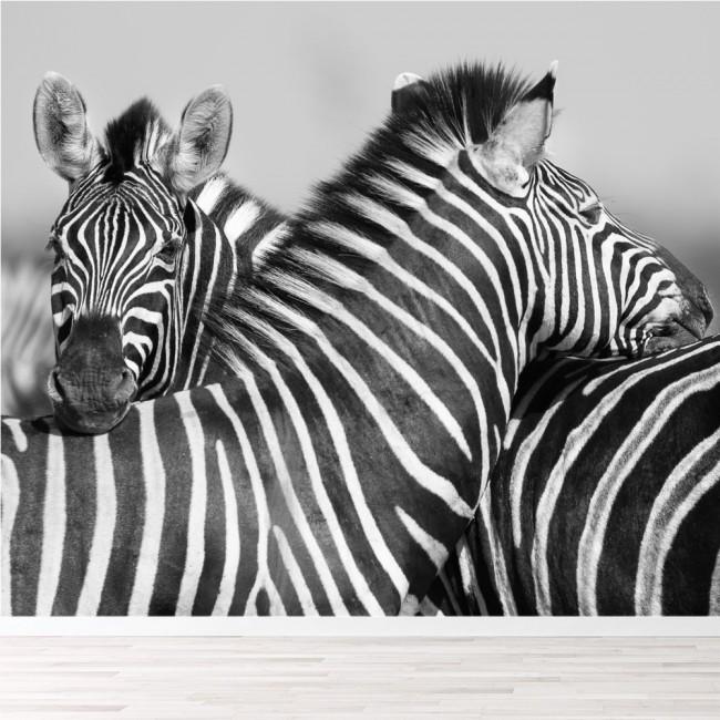 Black & White Zebra Wallpaper Wall Mural