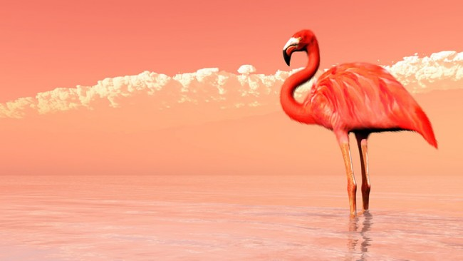 Pink Flamingo Wallpaper Wall Mural