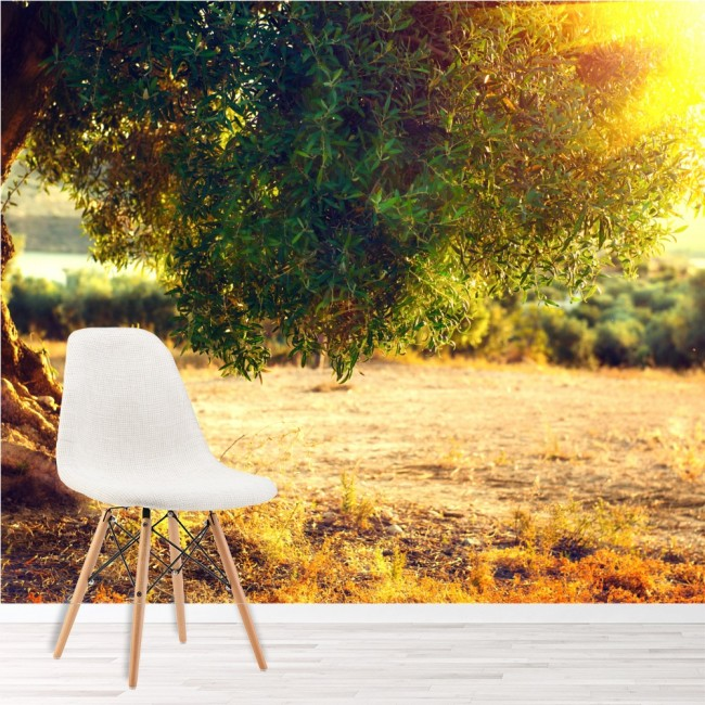 Olive Tree Wall Mural Sunset Landscape Wallpaper Living Room Photo ...