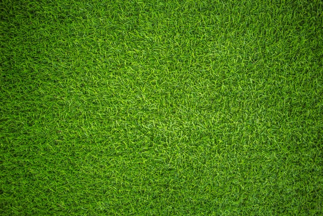 Green Grass Wallpaper Wall Mural